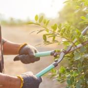 Gartenpflege: Damit das draussen Sein erholsam und motivierend ist